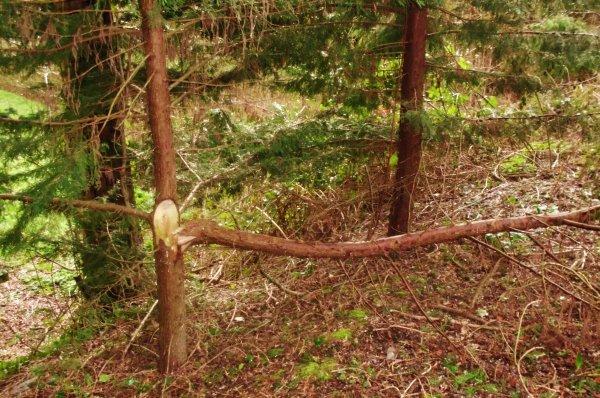 Reportage IFMBocage,,,15 minutes de tornade ...Bois de La Seuline