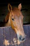 Photo de Photo-of-ponies
