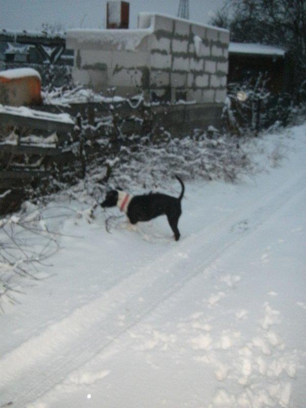 premier neige