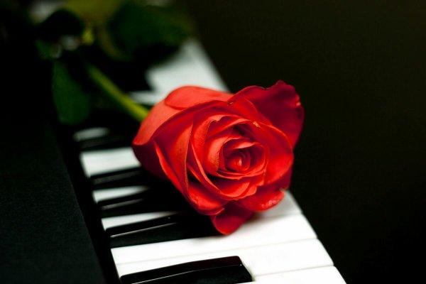 Le plus gros chagrin d'amour c'est de savoir que le seul qui peut vous consolé est celui qui vous a fait pleurer