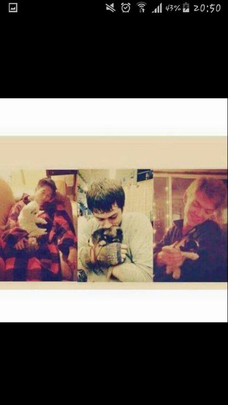 Newt/ Thomas/ Minho/ Gally