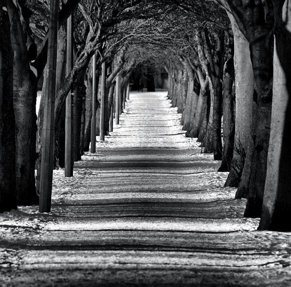 Et si notre vie n'était pas tracée d'une seule voie mais d'une multitude de possibilités ?