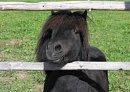 Photo de HorsesAndMy