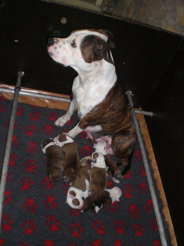 Freemous avec ses bébés