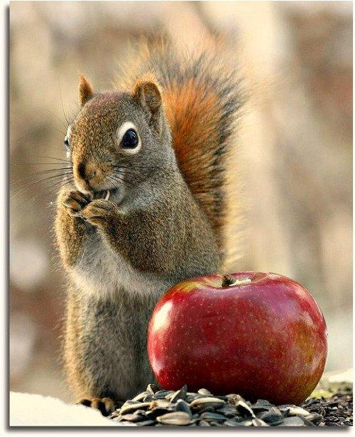 Une pomme...