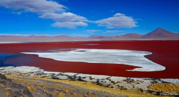 Le lac rouge de Bolivie...