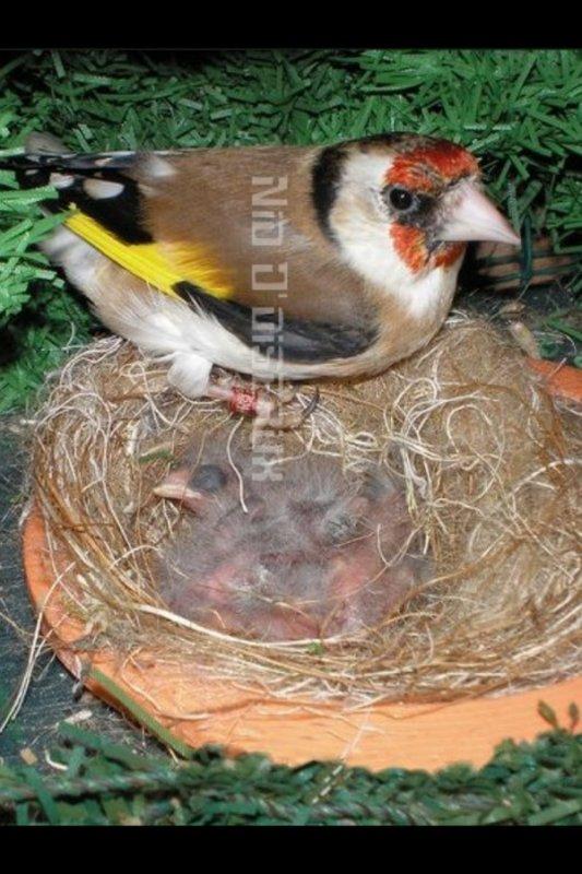 Magnifique photo de nid d'oiseau