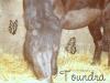 Owh-Toundra