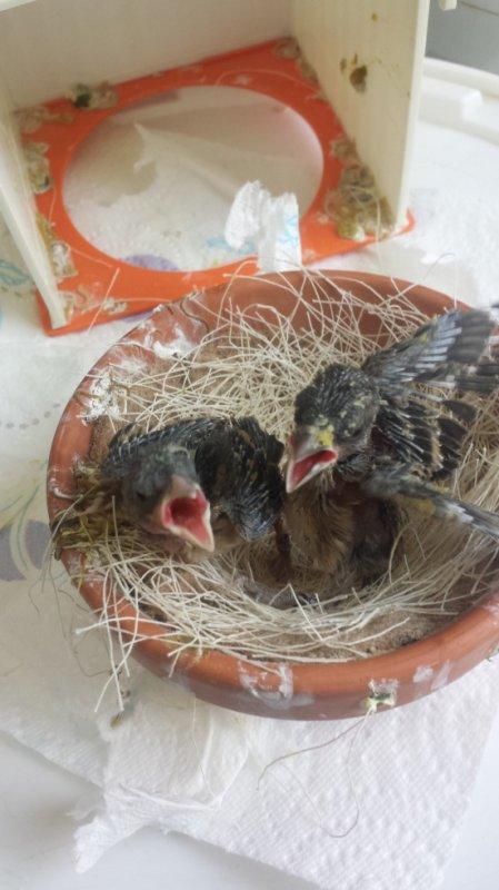 des nouvelles de mais deux petits bébé que je nourris