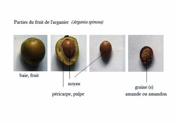 FRUIT D'ARGAN