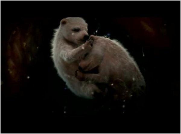 Les ours polaires ont une période de gestation relativement équilibrée qui s'étend sur 5 mois.