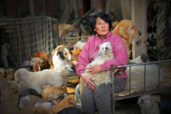 Cette personne, c'est Xiaoyun Yang, une enseignante retraitée de 63 ans. Portrait d'une femme qui mérite d'être connue du grand public.  Dans ce refuge, les animaux ont chacun 2 repas par jour, tandis que Mme Yang n'en a qu'un seul. Elle ne tourne jamais le dos aux animaux malades ou blessés, et avec les années, elle a même appris à soigner certains d'entre eux avec les conseils de vétérinaires.