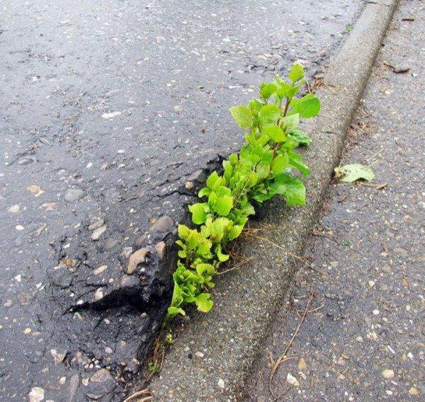 Quelques fois la nature parvient à se jouer de l'Homme et reprend ses droits. Voici une sélection de photos sublimes qui montrent que arbres, fleurs et plantes peuvent se battre et se surmener pour survivre coûte que coûte. Ce n'est pas facile tous les jours car les actions de l'Homme sont permanentes et ne respectent pas vraiment leur état.  Néanmoins, nous avons ici des preuves que certaines fleurs ou plantes arrivent à se frayer un chemin. Tout doucement. La beauté est alors de mise et le spectacle est fascinant.