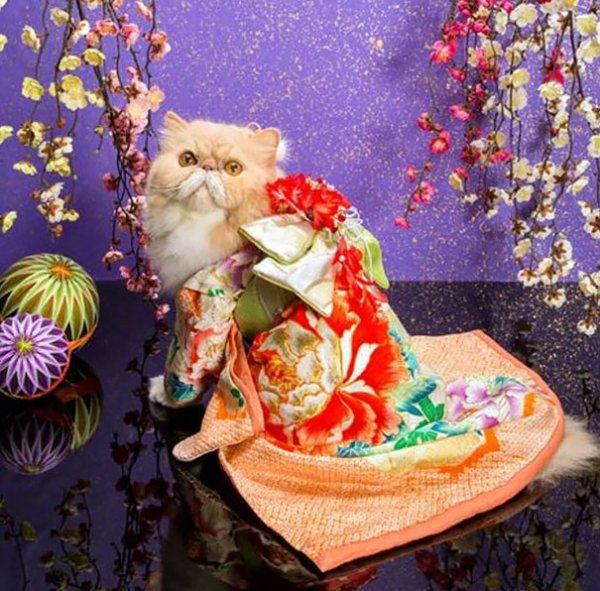 Des chats en kimono