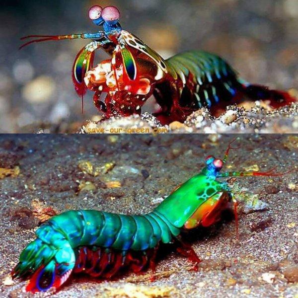 animaux aux couleurs improbables mais vraies