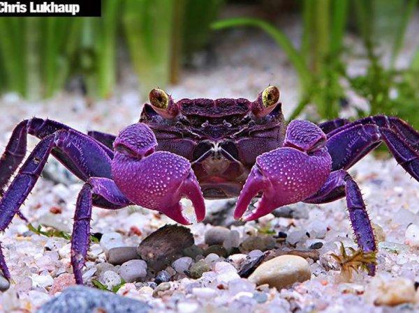 belles espèces découvertes en 2015