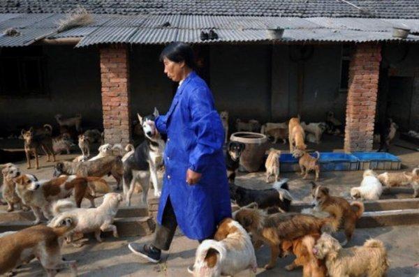 Une chinoise vit avec 1500 chiens et 200 chats