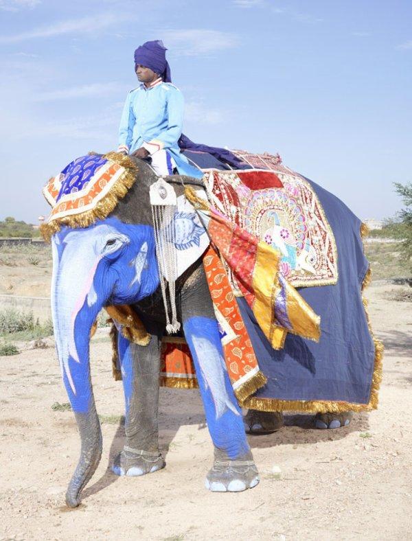 Charles Fréger est un photographe français qui n'hésite pas à partir à l'autre bout du monde pour immortaliser des moments exceptionnels. En 2013, il s'est rendu au Jaipur Elephant Festival et a pu photographier les magnifiques éléphants colorés qui y sont considérés comme des rois. Cette fête qui a lieu chaque année au Rajasthan (nord-ouest de l'Inde) rend hommage à ces animaux, qui sont pour l'occasion parés de tissus, bijoux et même de peinture. Laissez-vous emporter par cette célébration haute en couleur !