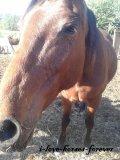 Photo de i-love-horses-forever
