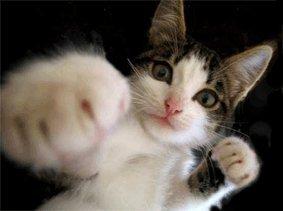 J'aimerais être un chat