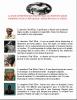 RDC NEWS: LA VRAIE INTERPRÉTATION PROPHÉTIQUE DU PROPHÈTE SIMON KIMBANGU POUR LA RÉPUBLIQUE DÉMOCRATIQUE DU CONGO