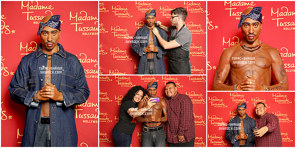 __ _▪ Statue de Tupac Shakur au musée de Madame Tussauds.    __