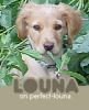 Perfect-Louna