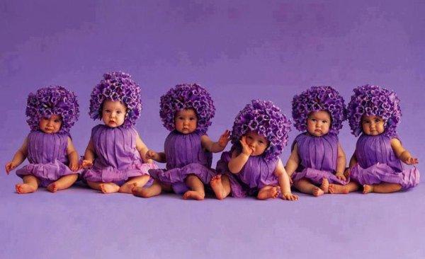 un bouquet de violette   cueillons  ceullions ses fleurettes