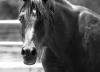 HorsesProverb