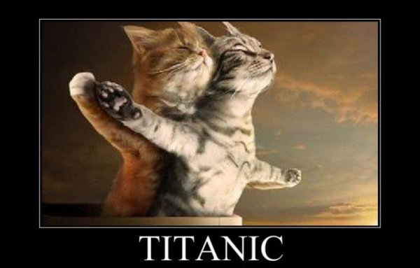 titanic chaton