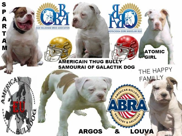 "THE HAPPY FAMILLY ""ARGOS"" & Nwes breeding Louva - Blog de americainbullstiger -"