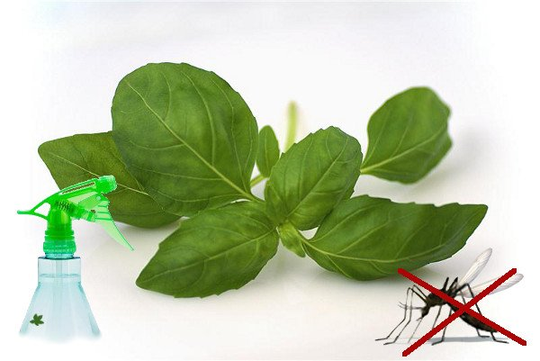 Divers plantes végétales répulsives contre les moustiques, tiques, mouches, insectes