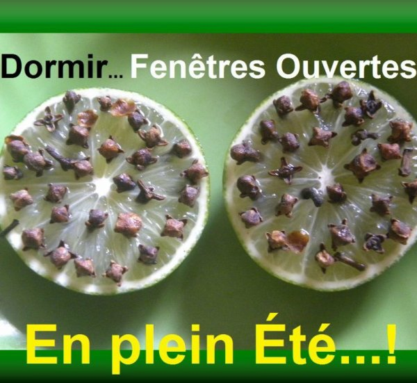 Clous de girofle dans une orange fraîche ou des citrons verts. Repoussent les moustiques, tiques,  mouche, insectes.