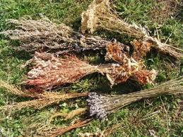 L'aurone un puissant insecticide naturel. Son odeur repousse les moustiques et les guêpes.
