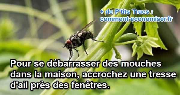 Plantez de l'ail tout autour de votre maison pour repousser les moustiques, mouches, insectes.