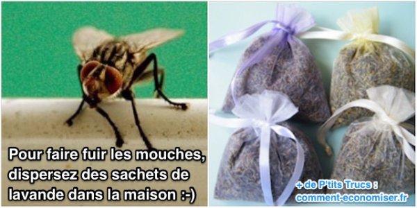 Comment fabriquer un piège naturel anti moustique et mouches ?