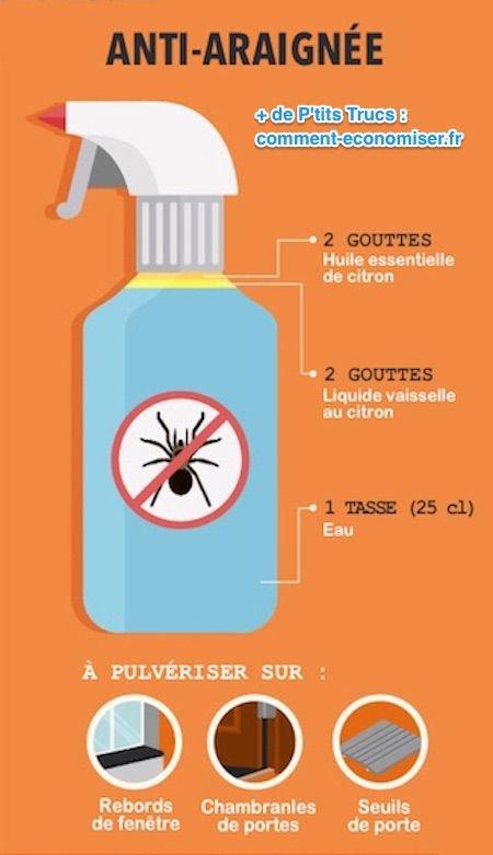 Trucs et astuces - Des astuces contre les araignées -Tricks against spiders