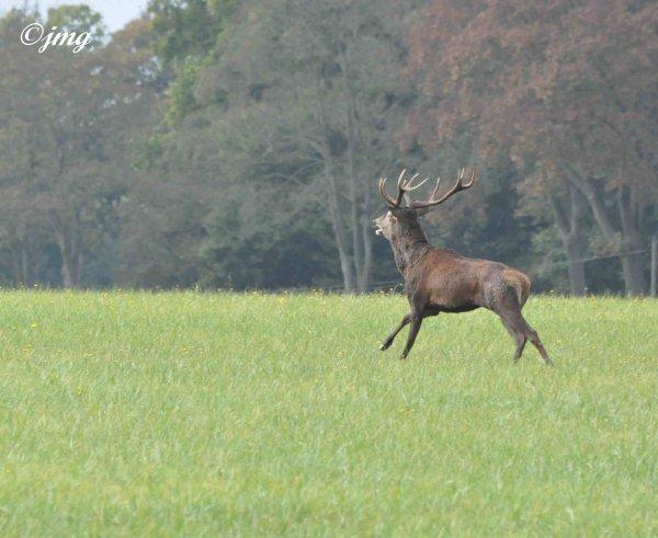Samedi 24/10/2014. Forêt d'Halatte.
