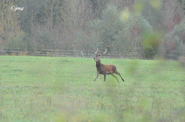 Samedi 24/10/2014. Forêt d'Halatte. (2)
