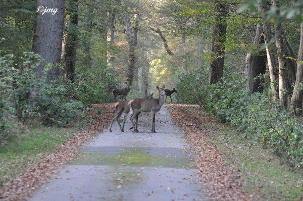 Vendredi 31/10/2014. Forêt d'Ermenonvile. (3)