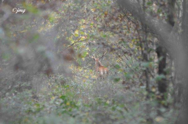 Mardi 04/11/2014. Forêt de Chantilly.