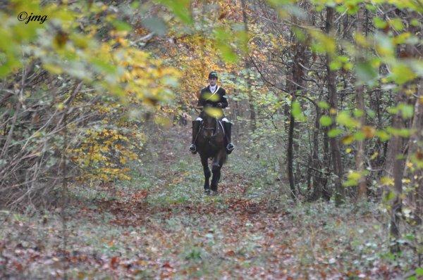 Samedi 15/11/20114. Forêt d'Halatte.