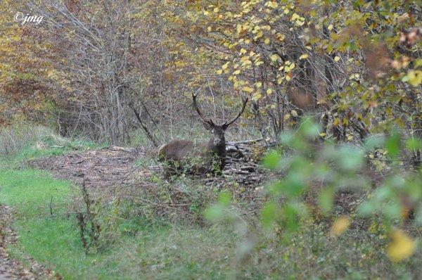 Samedi 15/11/20114. Forêt d'Halatte. (3)