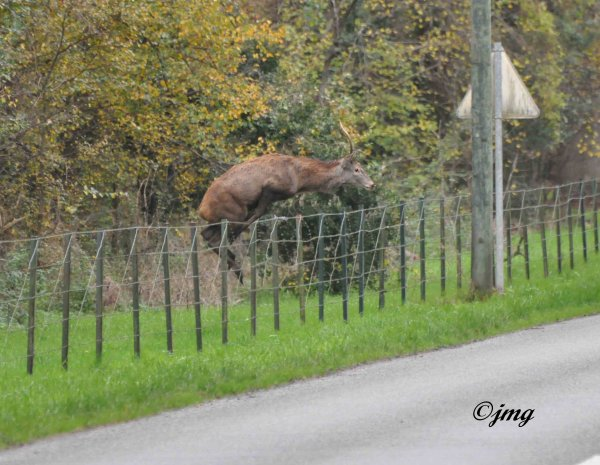 Samedi 15/11/20114. Forêt d'Halatte. (4)