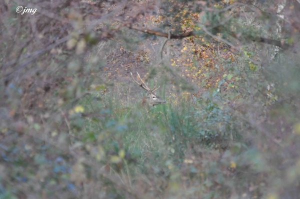 Mardi 18/11/2014. Forêt de Chantilly. (1)
