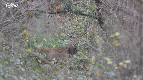 Mardi 25/11/2014. Forêt de Chantilly.