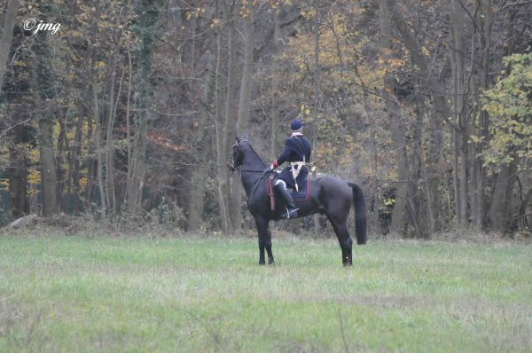 Mardi 25/11/2014. Forêt de Chantilly.(2)