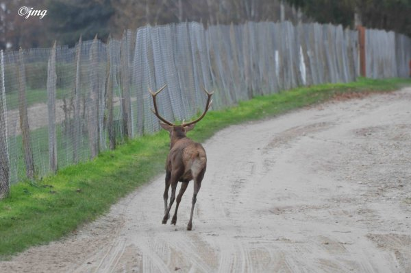 Mardi 25/11/2014. Forêt de Chantilly. (3)