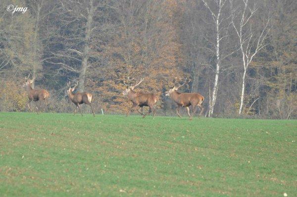 Samedi 29/11/2014. Forêt d'Ermenonville.