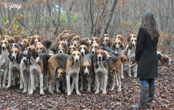 Mardi 02/12/2014. Forêt de Chantilly. (2)